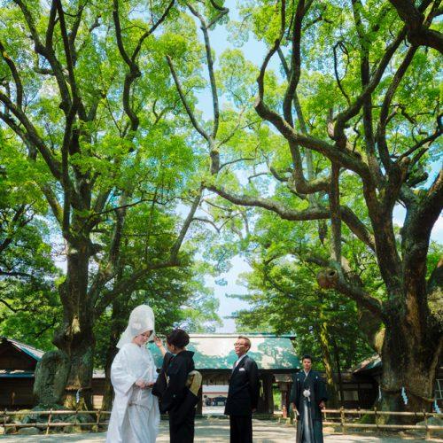樹齢700年の楠が伊曽乃神社のご神木。挙式前の家族を森の精霊達がそっと見守ってくれる